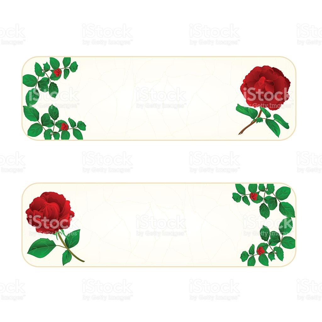 Banner Cracks In The Porcelain And Rose Vintage Vector stock.