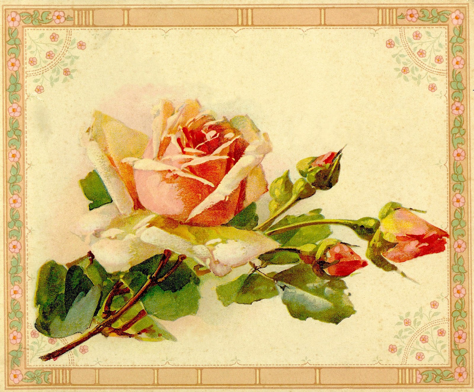 1000+ images about Antique Roses on Pinterest.