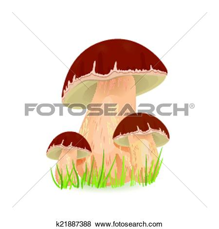 Clip Art of Edible mushroom porcini for you design k21887388.