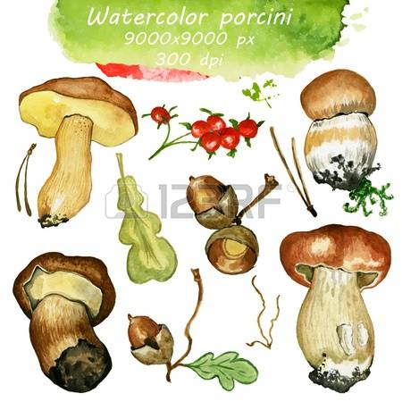 511 Porcini Stock Vector Illustration And Royalty Free Porcini Clipart.