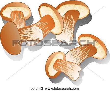 Drawing of Porcini Mushrooms.