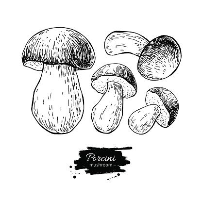 Porcini Mushroom Clip Art, Vector Images & Illustrations.