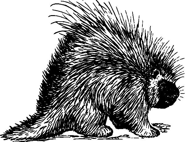 Porcupine Clipart.