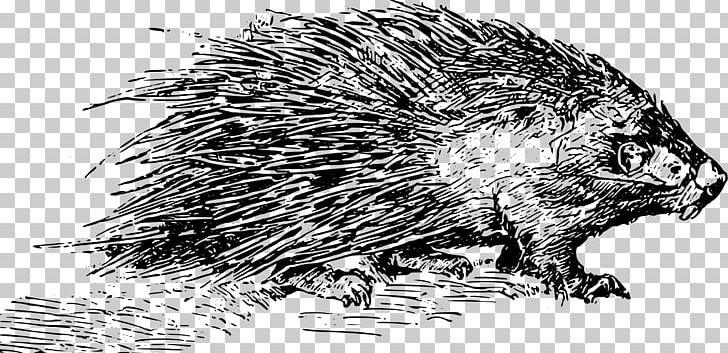 Porcupine Domesticated Hedgehog PNG, Clipart, Beaver, Black.