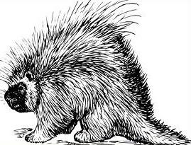 Free Porcupine Clipart.