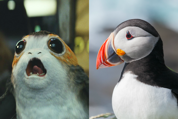 Porgs in \'Star Wars: The Last Jedi\' Look Like Puffins for a.