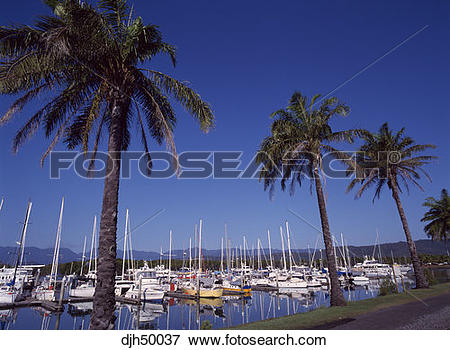 Picture of Queensland, Port Douglas djh50037.