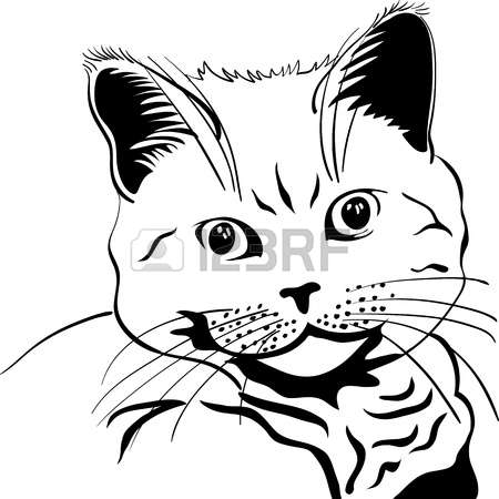 526 British Cat Stock Vector Illustration And Royalty Free British.