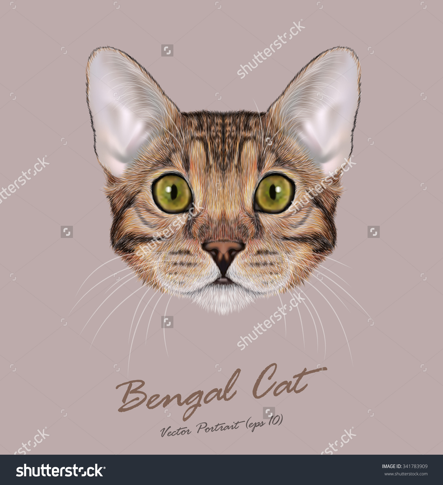 Cat Breeds Stock Vectors & Vector Clip Art.