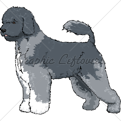 Portuguese Water Dog · GL Stock Images.