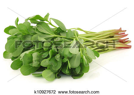 Stock Photo of purslane (Portulaca oleracea) k10927672.