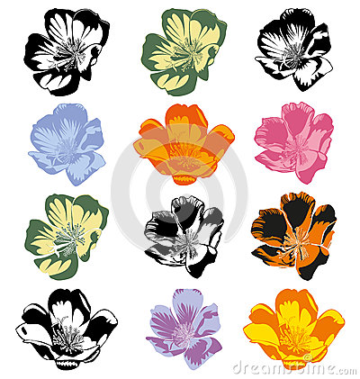 Portulaca Stock Illustrations.