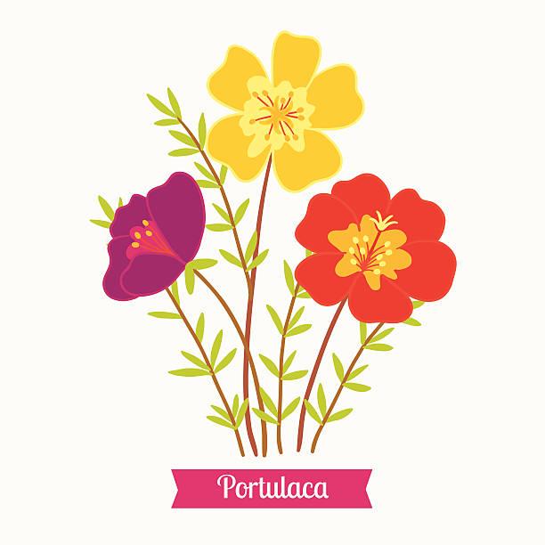 Purslane Clip Art, Vector Images & Illustrations.