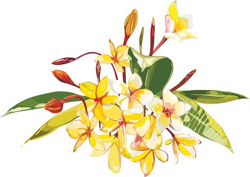 Portulaca Flowers Clip Art, Vector Images & Illustrations.