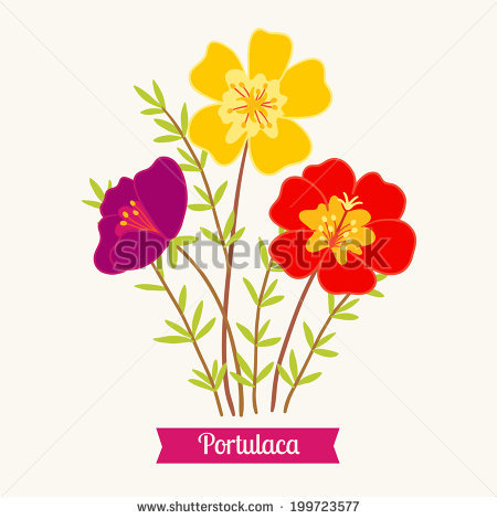 Purslane Stock Photos, Royalty.