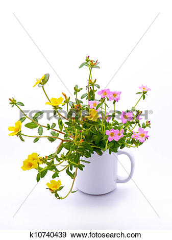 Stock Photograph of Portulaca flower in glass isolated on white.