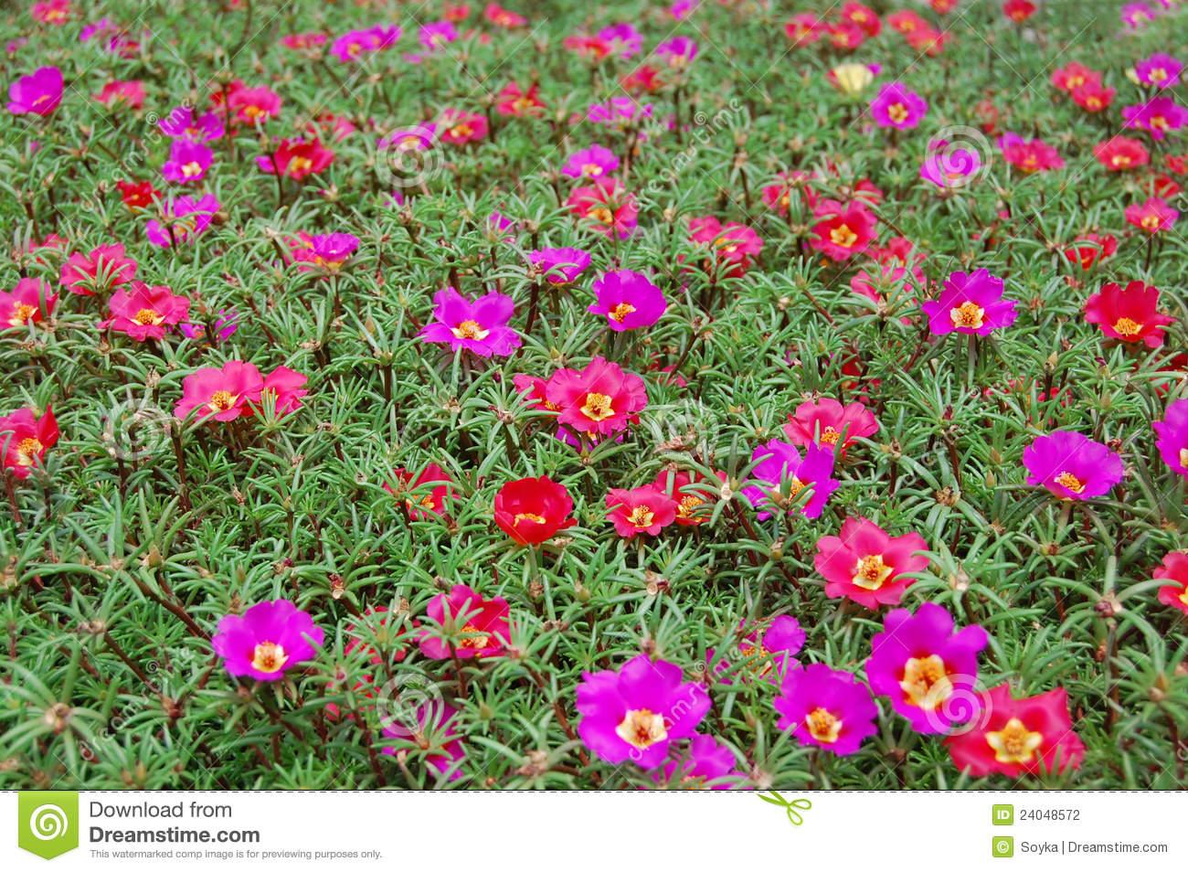 Beautiful Purple Bell Flowers.