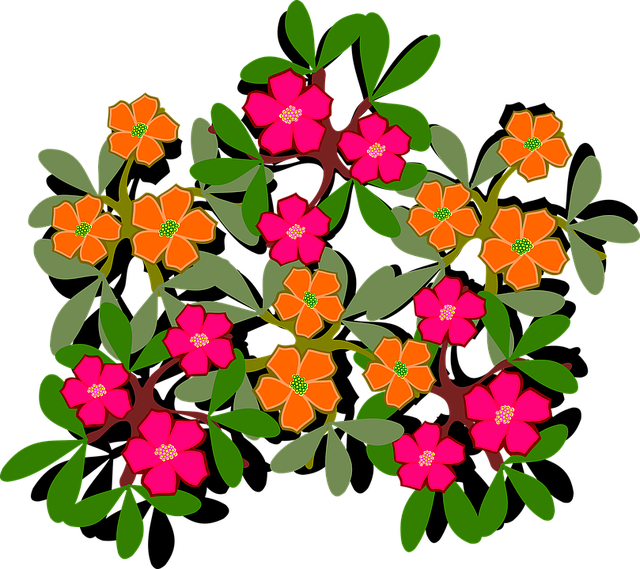 Free photo Portulaca Grandiflora Portulakgewaechs Portulacaceae.