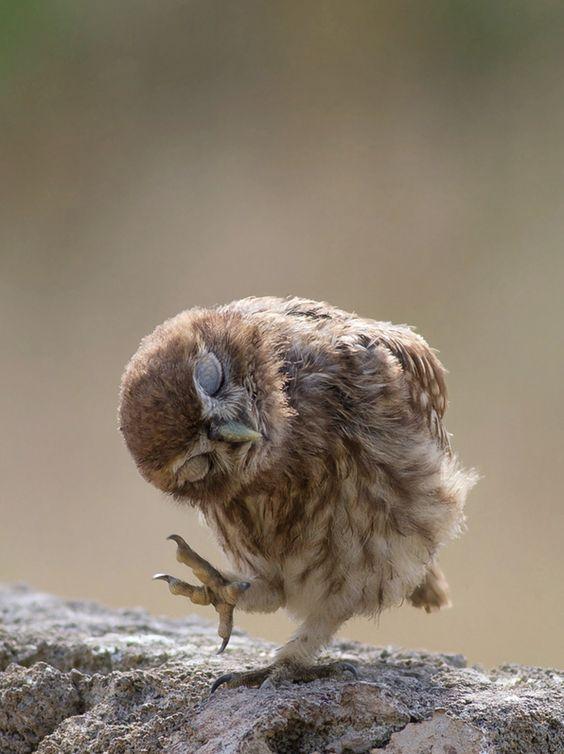Dancing Owl.