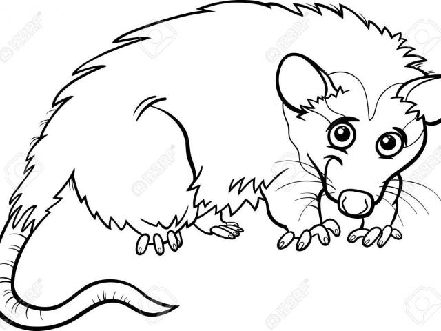 Free Opossum Clipart, Download Free Clip Art on Owips.com.