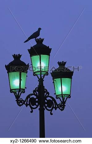 Stock Photography of Bird on top of city lamp post at dusk xy2.