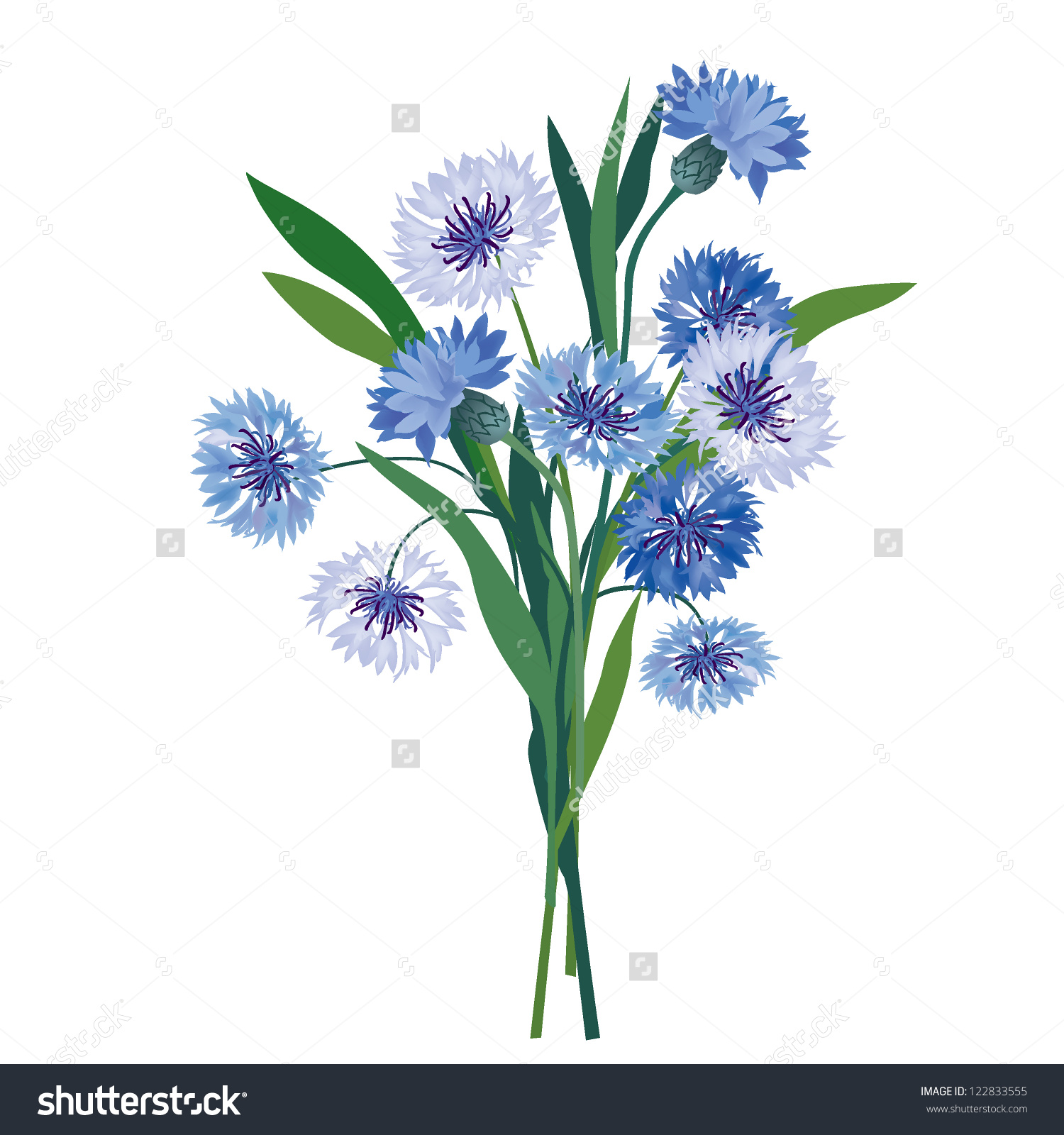 Cornflower Wildflower Posy Meadow Flower Bouquet Stock Vector.