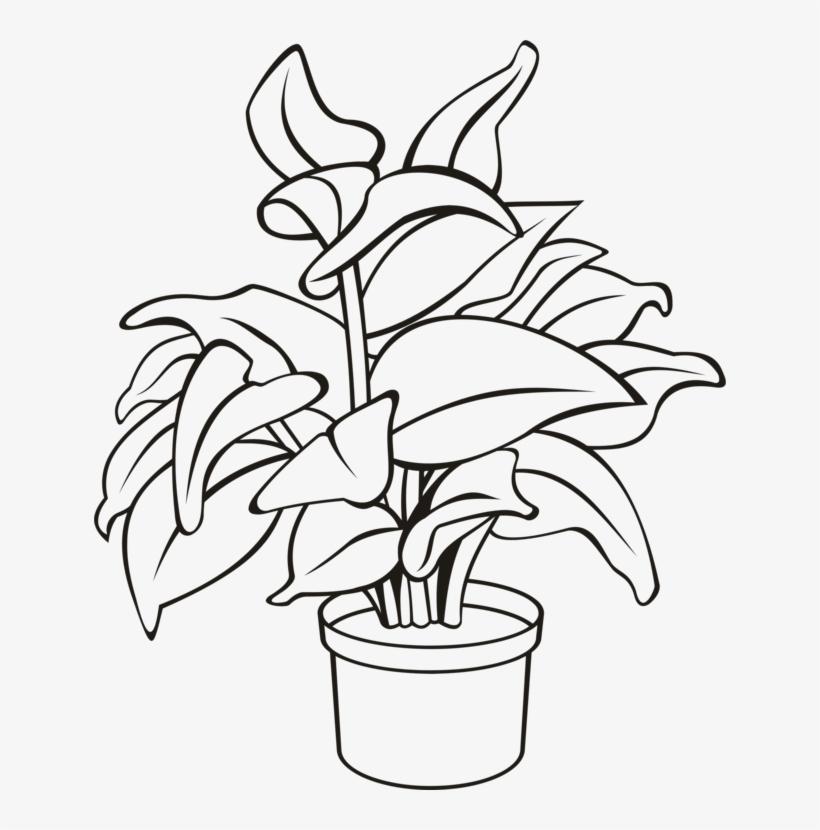 Flowerpot Houseplant Plants Leaf.