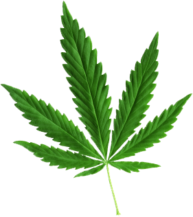 Pot leaf png clipart images gallery for free download.