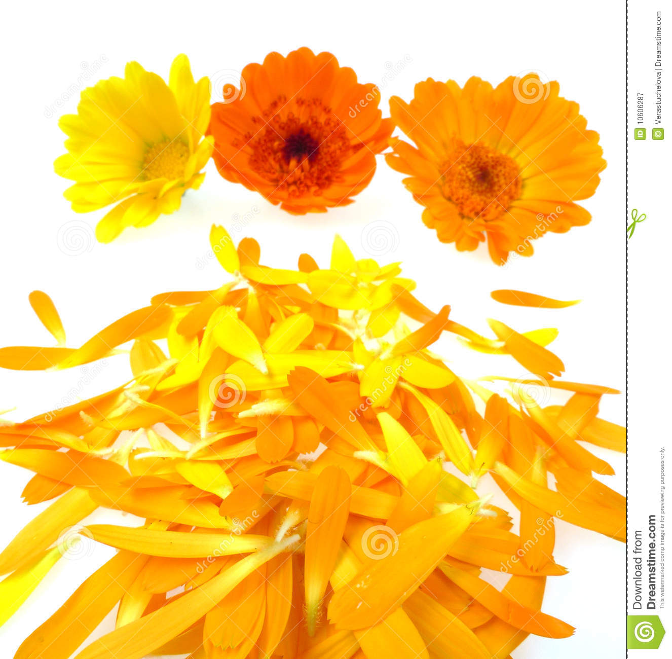 Pot Marigold Flowers With Leaves Royalty Free Stock Photography.