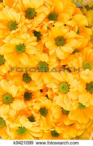 Stock Photograph of Orange pot marigold k9421099.