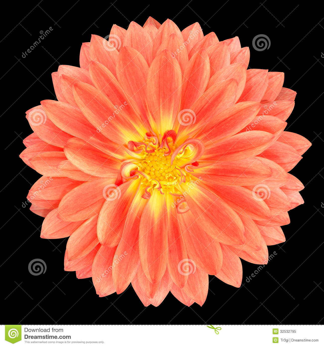 Calendula (Pot Marigold) Flower Petals Stock Photos.