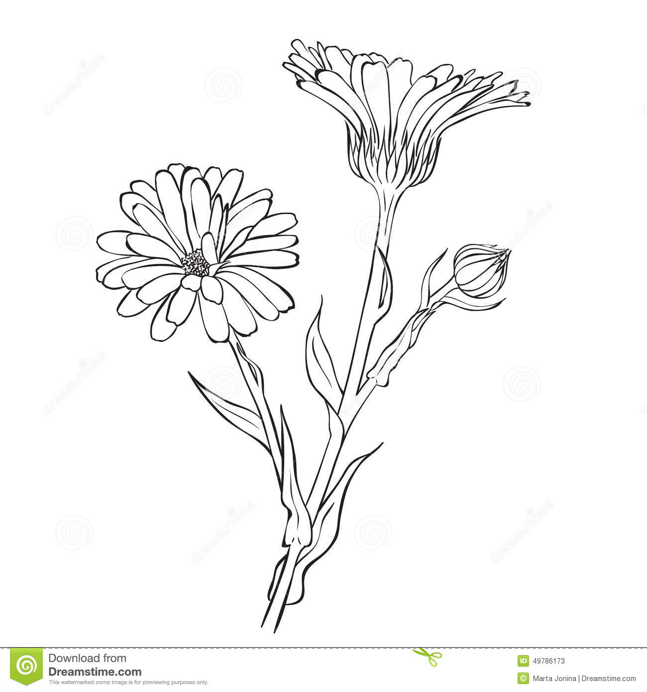 Hand Drawn Flowers.