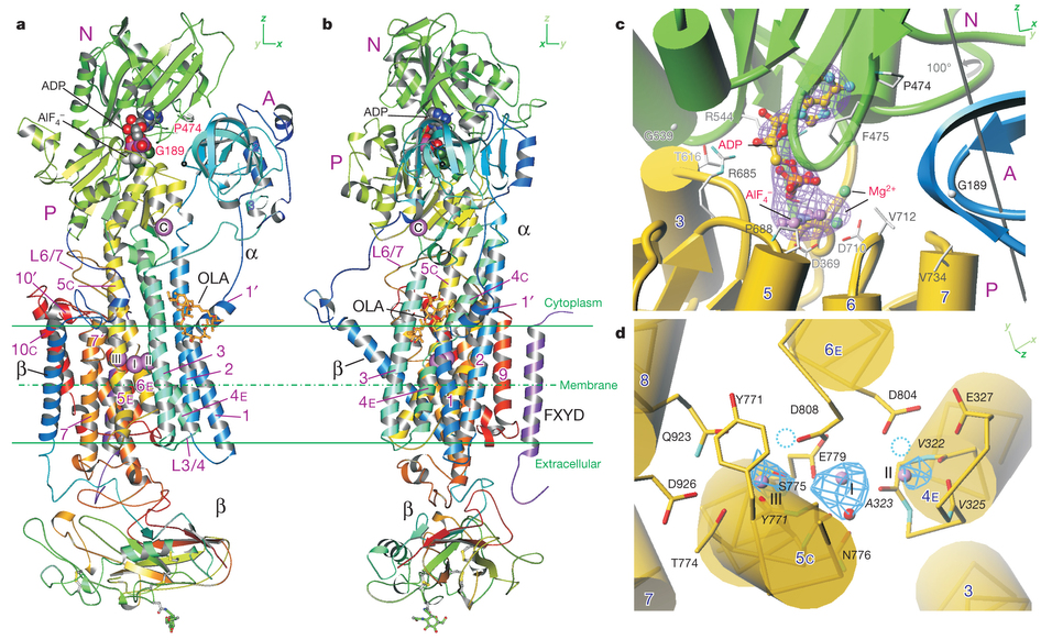 Crystal structure of a Na+.
