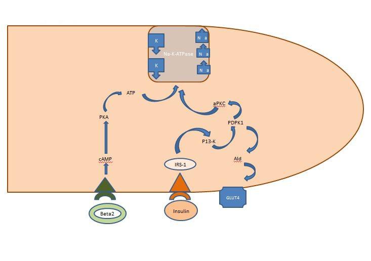 First in a series on hyperkalemia: hyperkalemia, the sodium.
