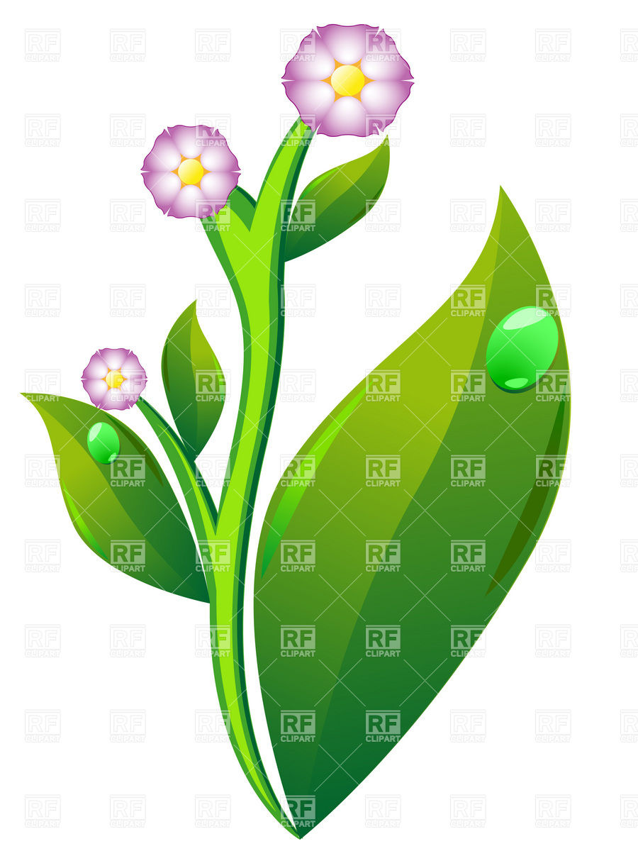 Potato blossom and leaves Vector Image #19160.