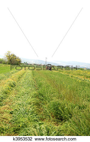 Stock Photo of The potato in the field blossoms background.