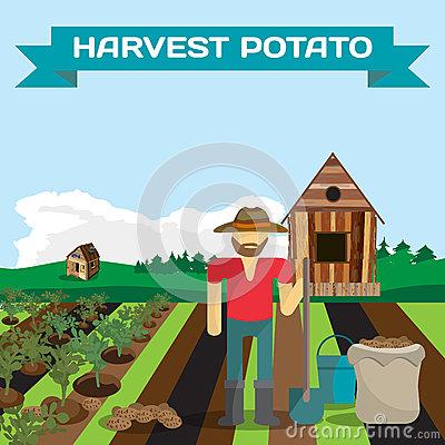 Potato Bush Stock Illustrations, Vectors, & Clipart.