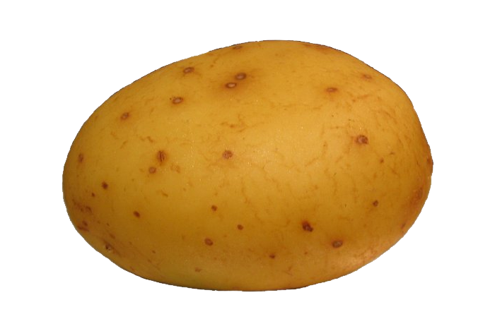 Potato Clipart Free.