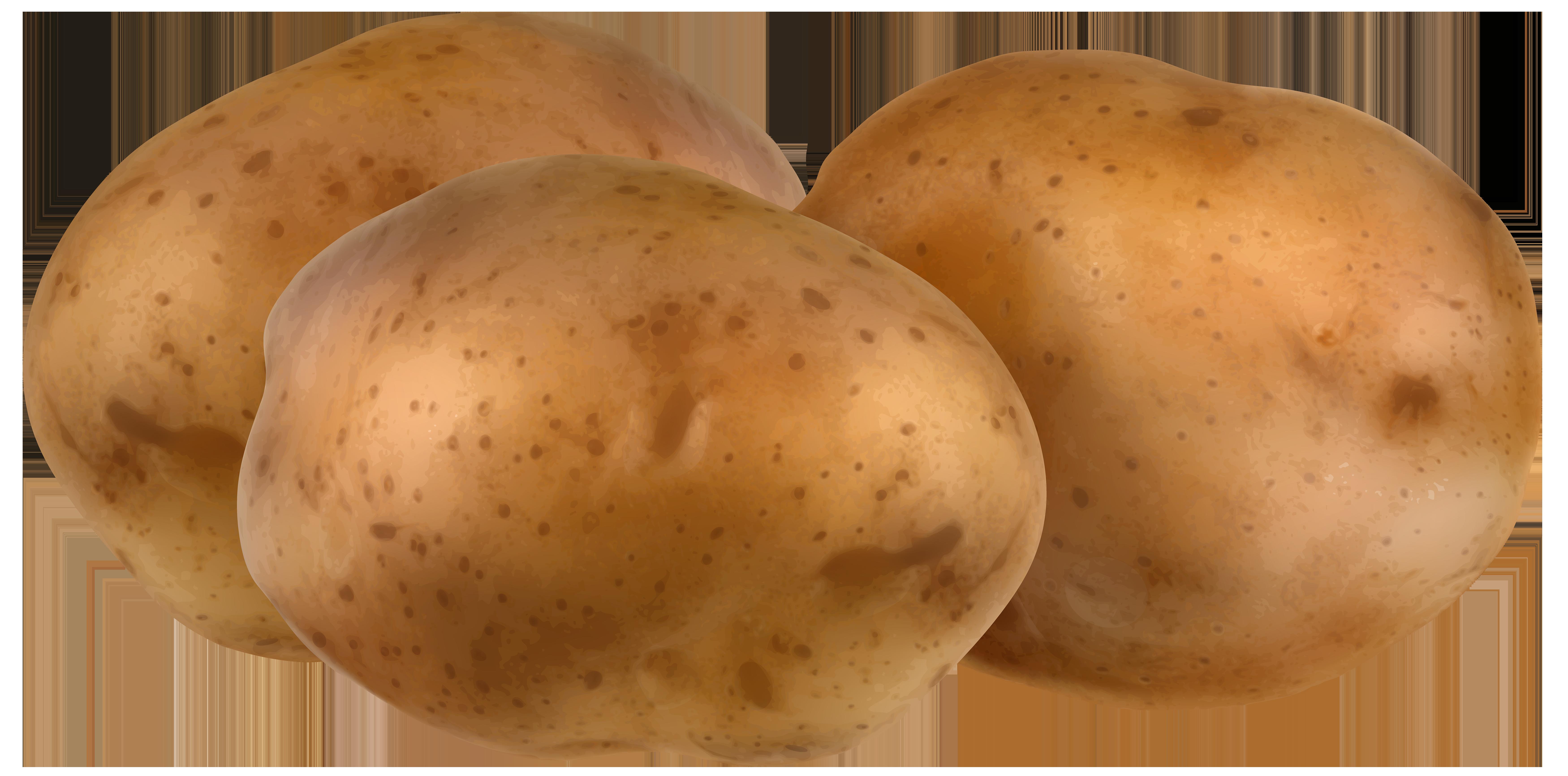 Potato Clipart Transparent.