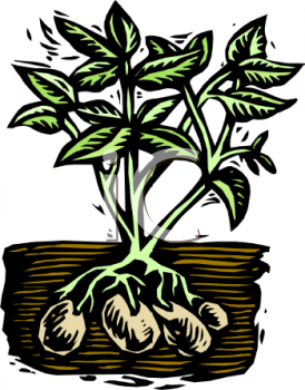 Royalty Free Clip Art Image: Potato Plant with the Potatoes.