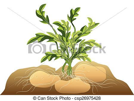 Potato soil Vector Clip Art Royalty Free. 39 Potato soil clipart.