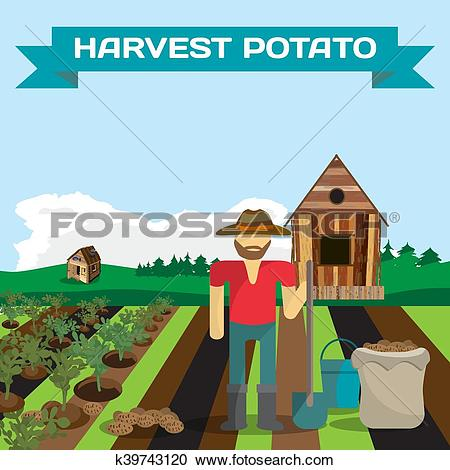 Clipart of Man harvesting potato in a field in the village. Manual.
