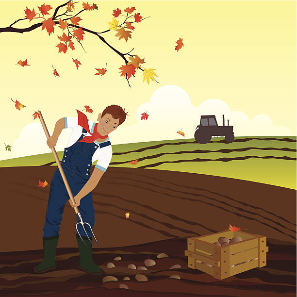 Man Harvesting Potato In The Field Clip Art, Vector Images.
