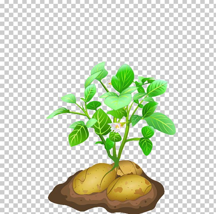 Vegetable Potato Plant PNG, Clipart, Clip Art, Download.
