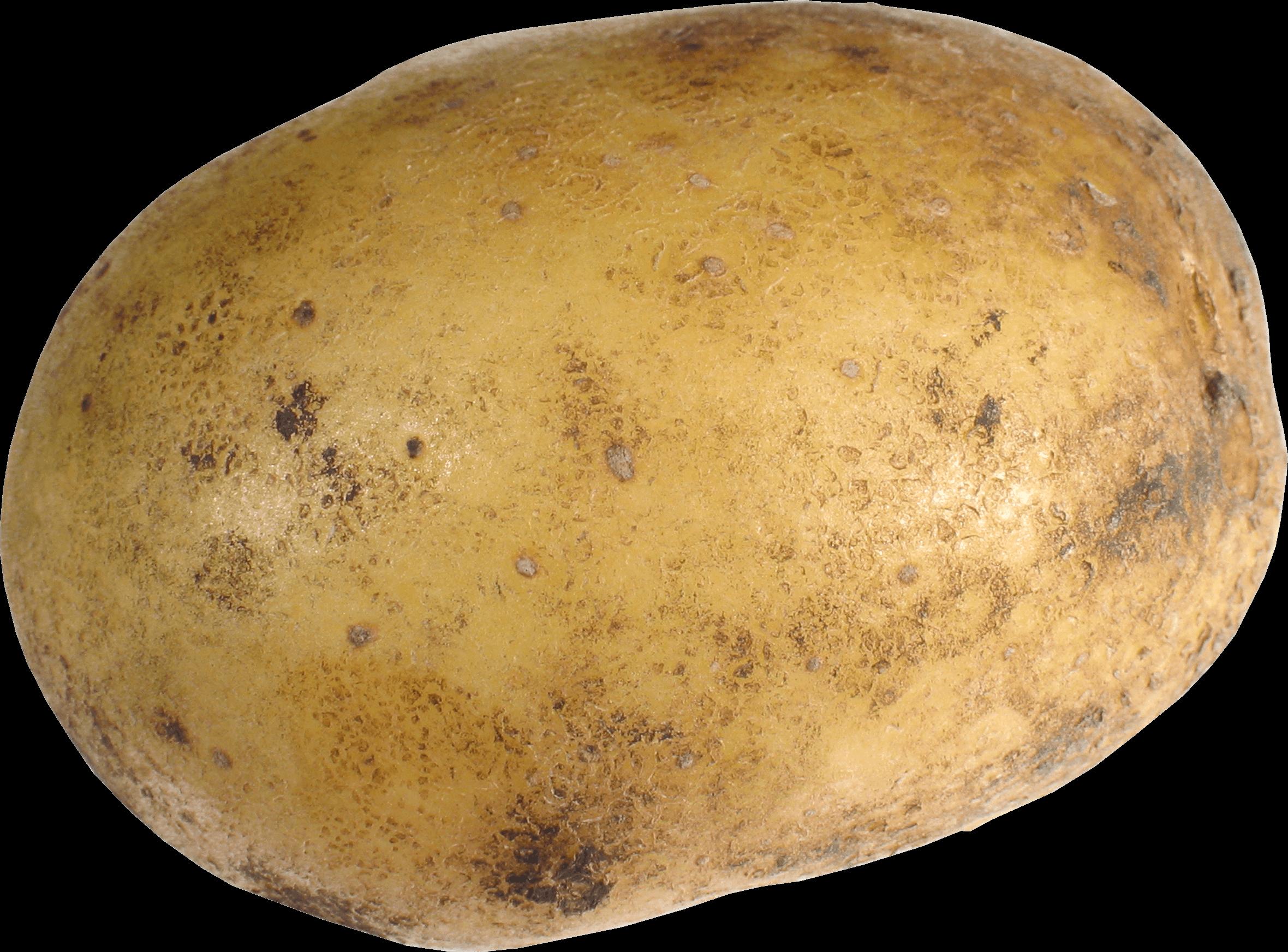 Single Potato transparent PNG.