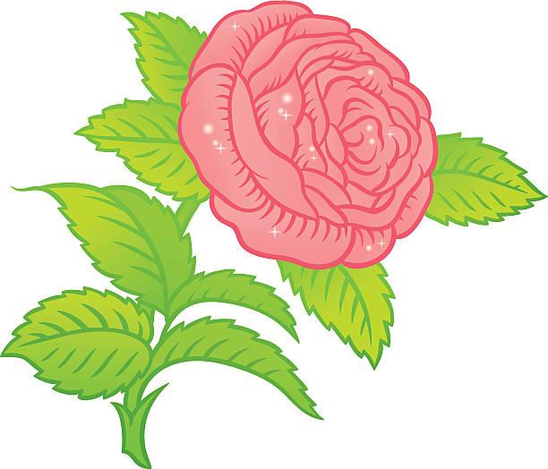 White Rose Potato Clip Art, Vector Images & Illustrations.