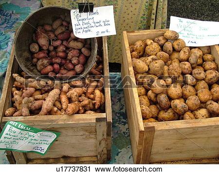 Stock Photography of Montpelier, VT, Vermont, Farmer's Market.