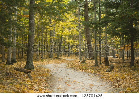 Conifer Forest Stock Photos, Royalty.
