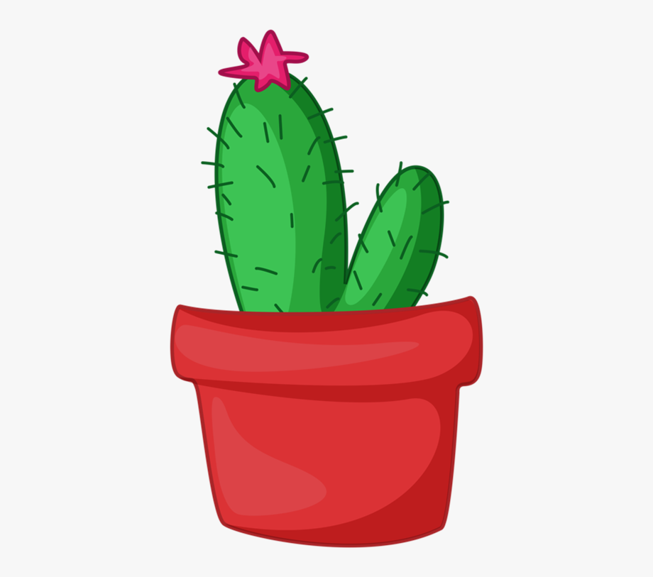 2 Cactus Mexicano, Potted Flowers, Potted Plants, Flower.
