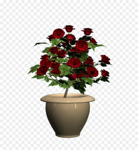 potted flowers png download.
